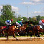 Gdzie na wyścigi konne? Jak zacząć obstawiać zawody jeździeckie